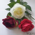Rožė su kot.