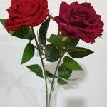Rožė su kot.barch.