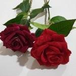 Rožė su kot. barch.