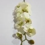 SUN-315 Orchidėja 90cm