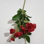 SUN-598 Rožių š.68cm