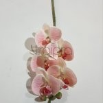 MST-1603 Orchidėja gum.