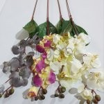 Orchidėja su kot.